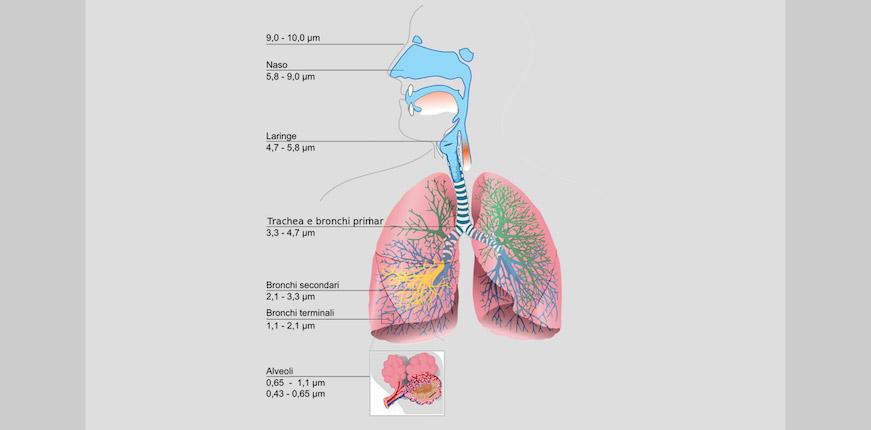 Penetrazione delle polveri nell'apparato respiratorio